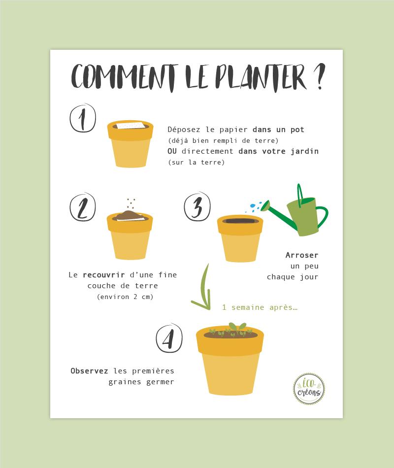 étapes pour planter le papier ensemencé